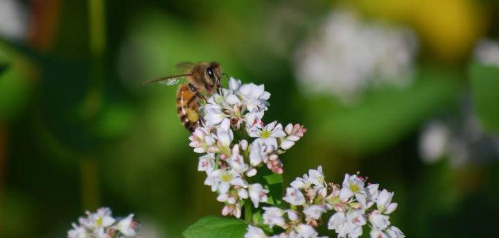 Bee Pride Bees
