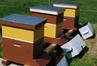 Bee Pride Beekeeping